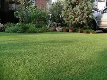 密度が上がって苔や藻が発生しなくなった芝生