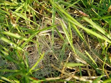 クモの巣状の菌糸