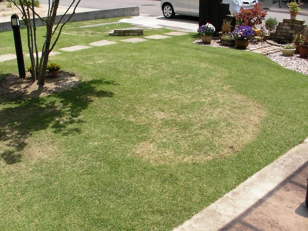 ラージパッチが発症した芝生