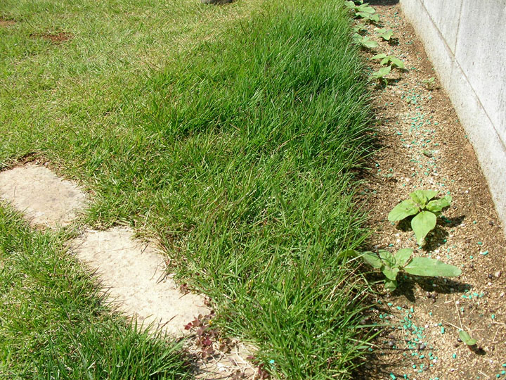 芝刈りと芝生のレイアウト変更1