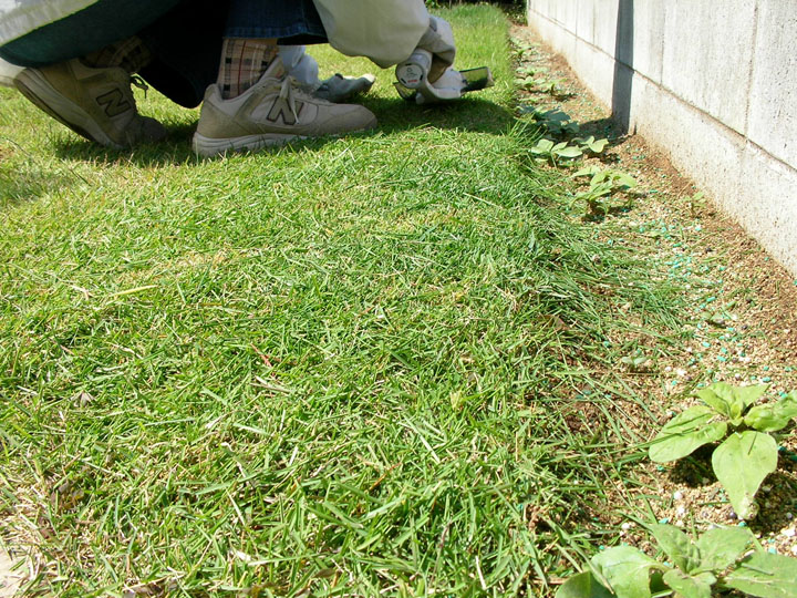 芝刈りと芝生のレイアウト変更4