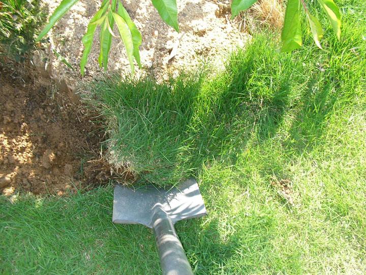 芝刈りと芝生のレイアウト変更13