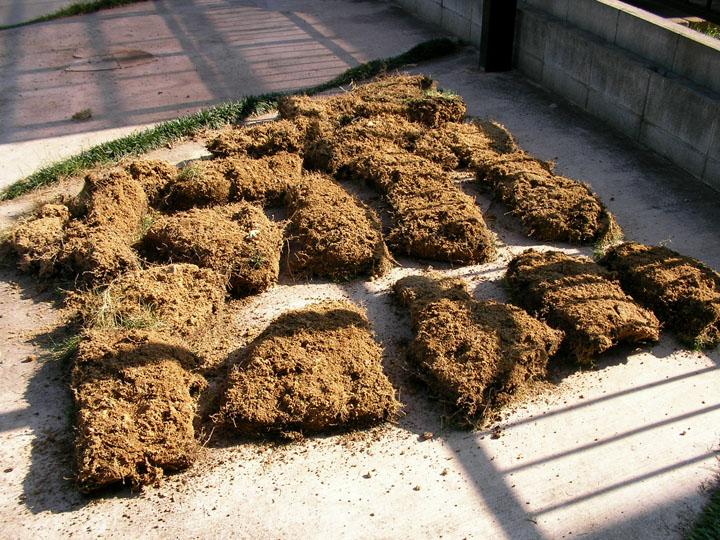 芝刈りと芝生のレイアウト変更21