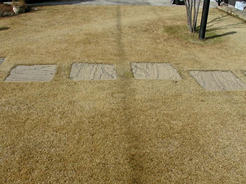 芝生の更新作業1