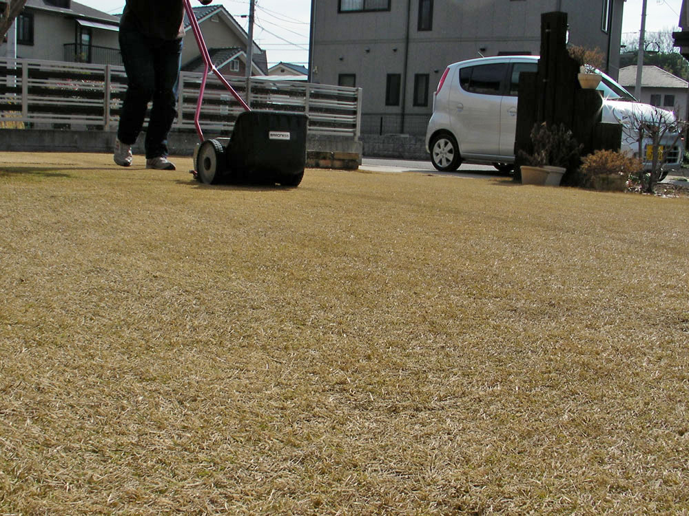 芝生の更新作業5