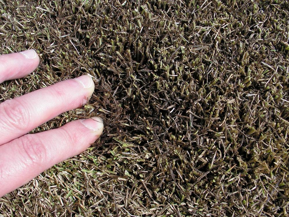 芝生の更新作業8