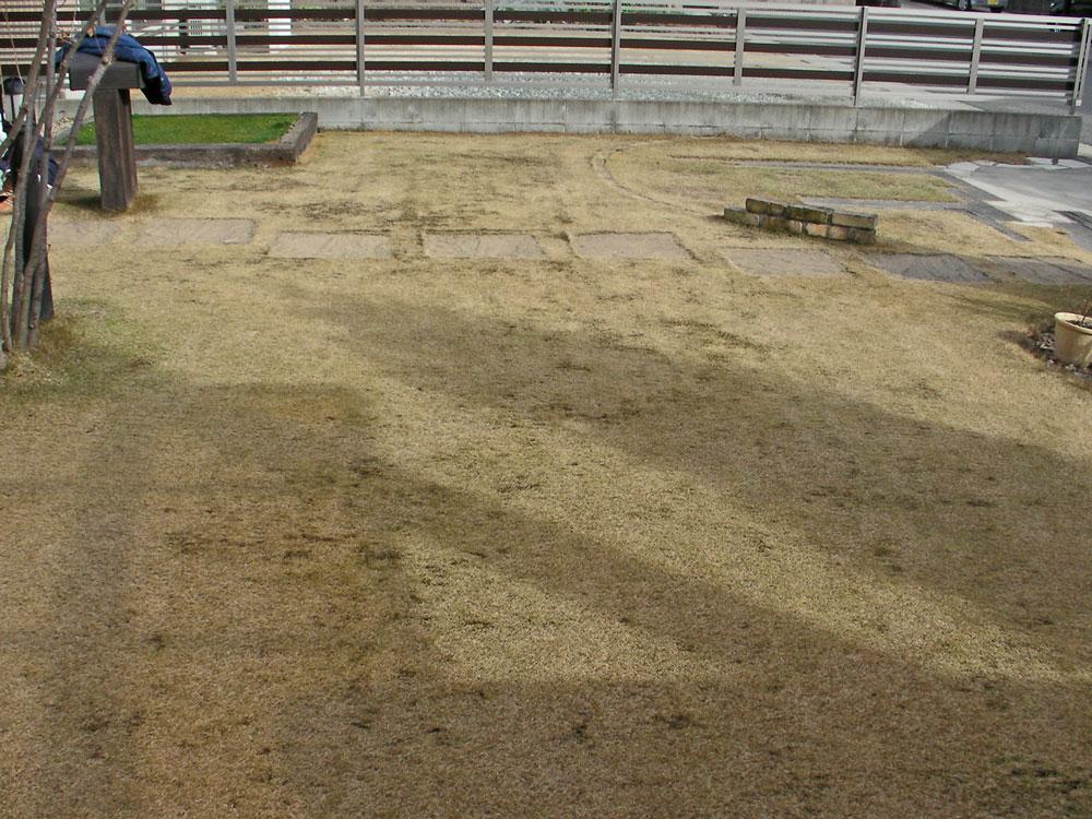 芝生の更新作業6