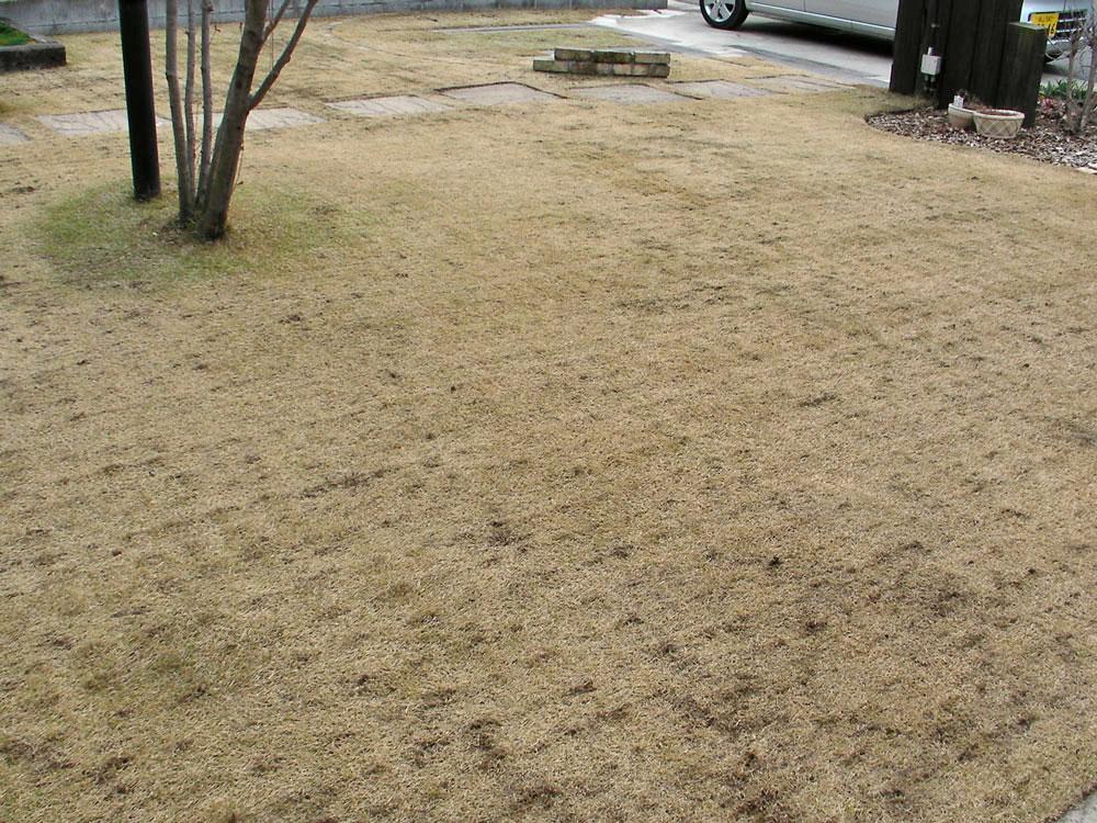 芝生の更新作業10