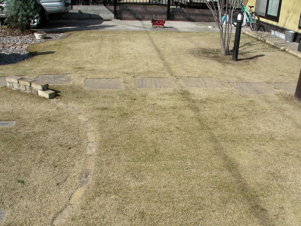 芝生の更新作業7