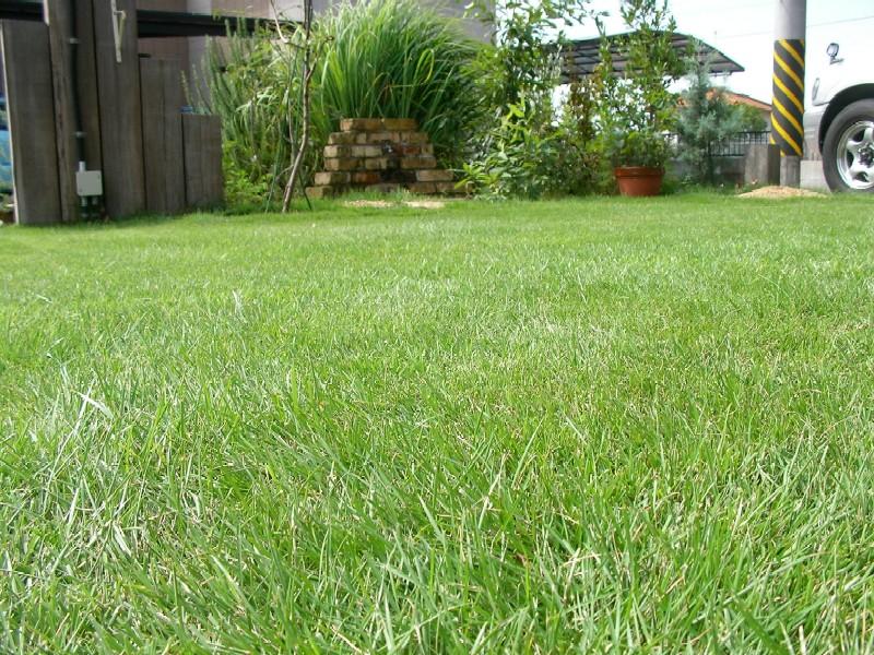 手動リール式芝刈り機で刈った芝生の様子
