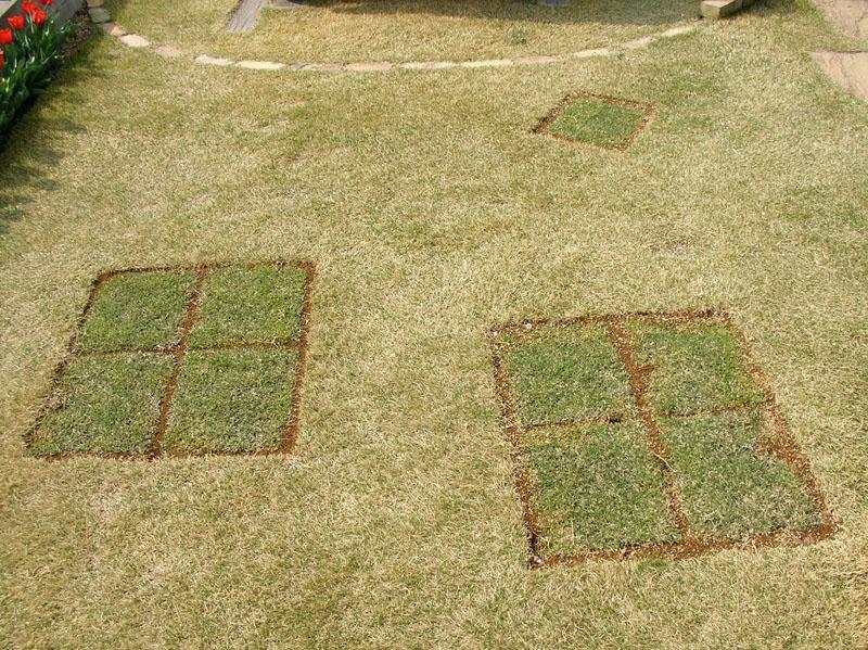 張り替えた芝生の経過報告2