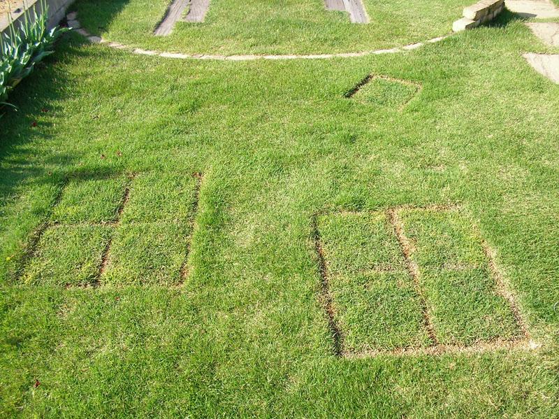 張り替えた芝生の経過報告4