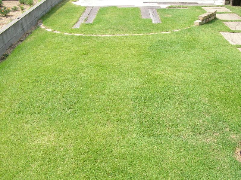 張り替えた芝生の経過報告9