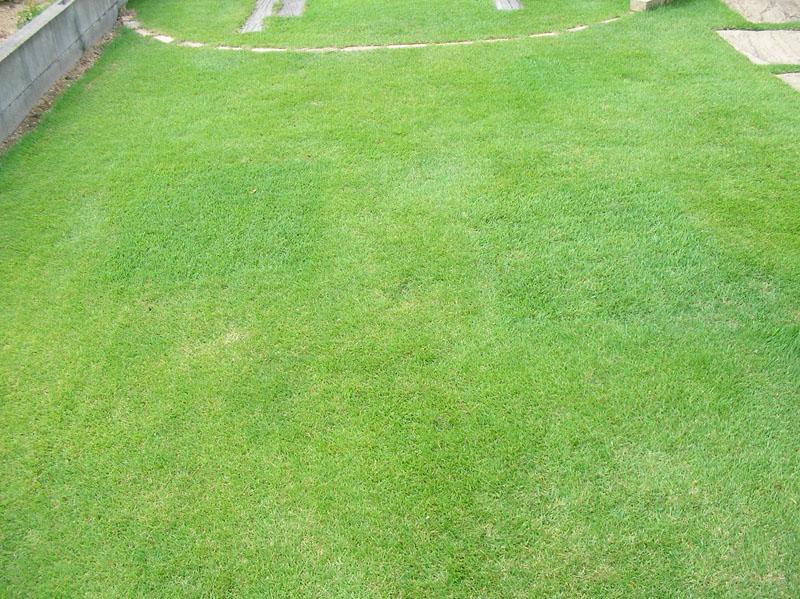張り替えた芝生の経過報告10