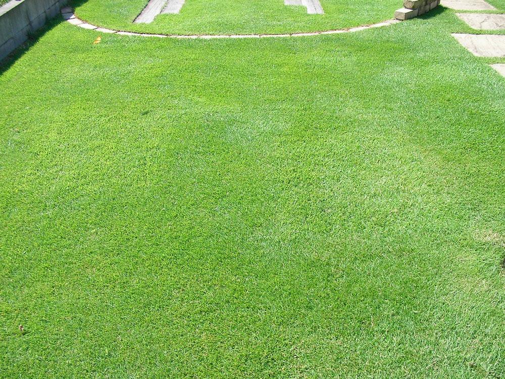 張り替えた芝生の経過報告11