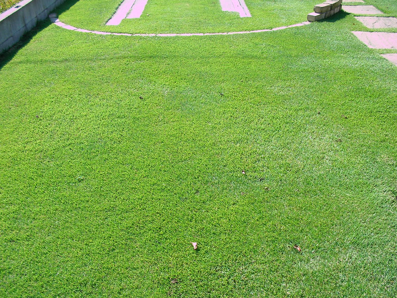 張り替えた芝生の経過報告12