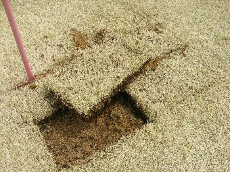 芝生張替えの様子2