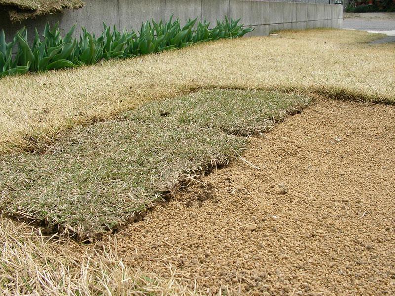 芝生張替えの様子4