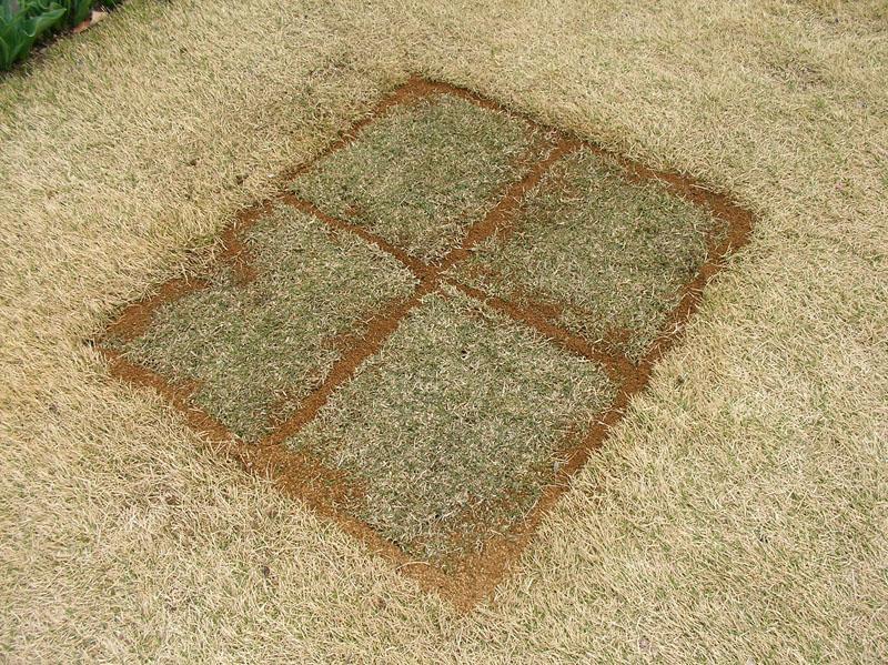 芝生張替えの様子5