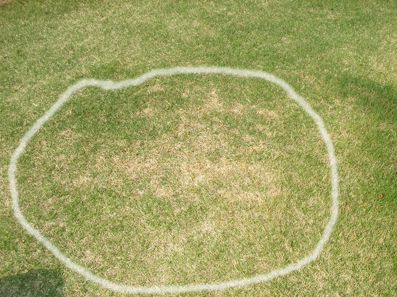 芝生に除草剤の影響が出ている様子2008年04月26日