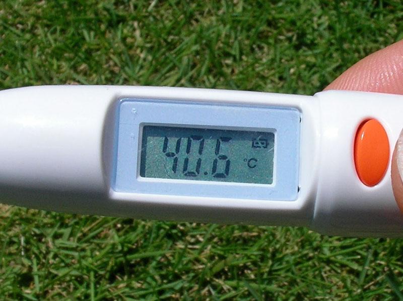 2008年08月03日(日)14時の炎天下の芝生