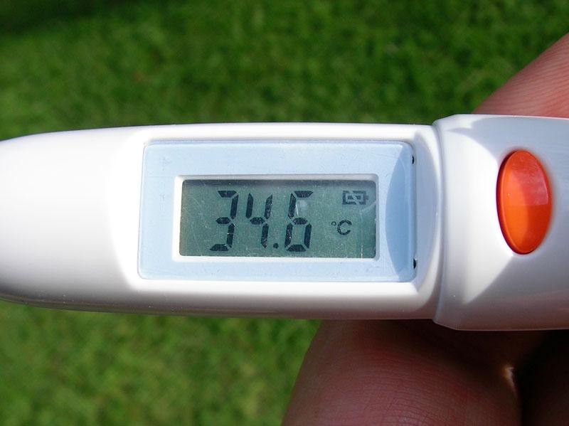 2008年08月03日(日)17時の芝生