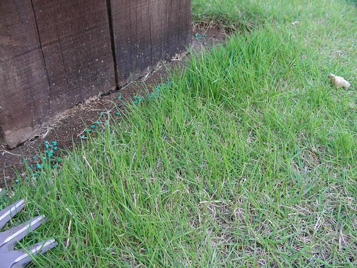 際がよく伸びた芝生
