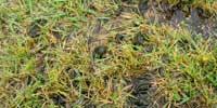 苔対策・藻対策