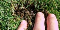 芝生のサッチ分解剤