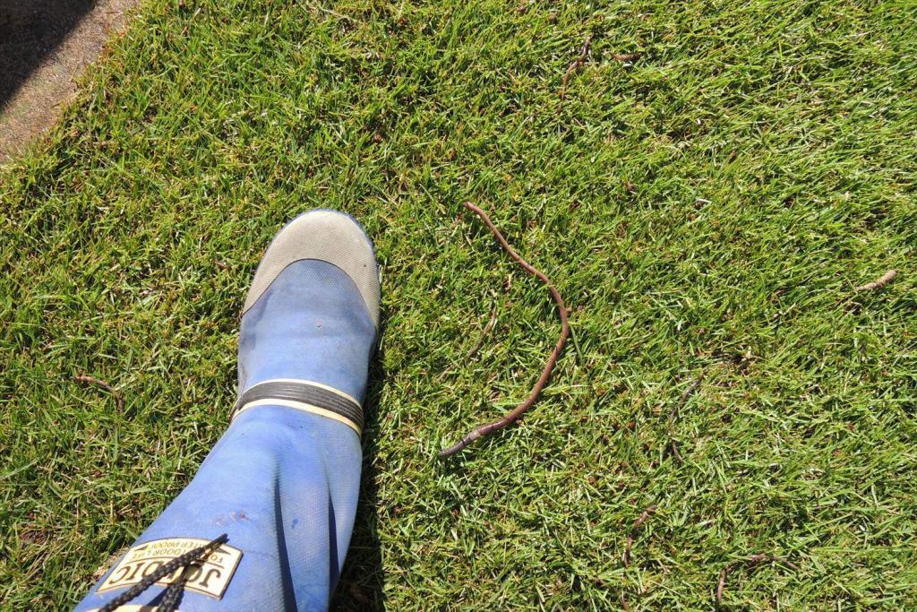 芝生のミミズ対策