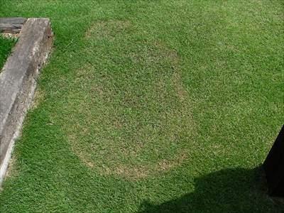 芝生の病害対策・予防