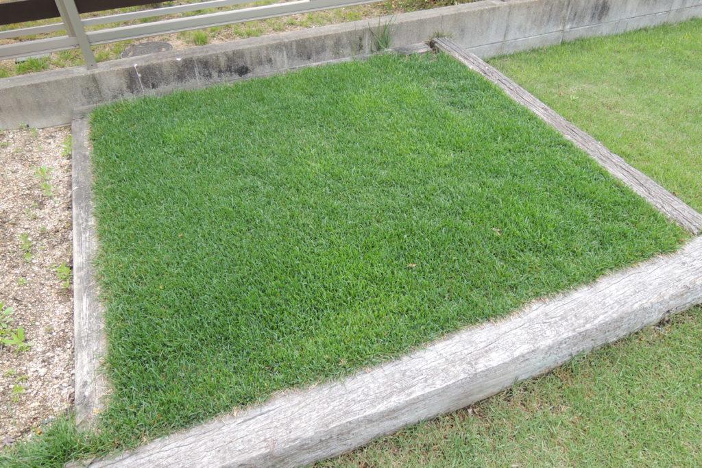 4月の芝生の手入れ 基本作業と注意点