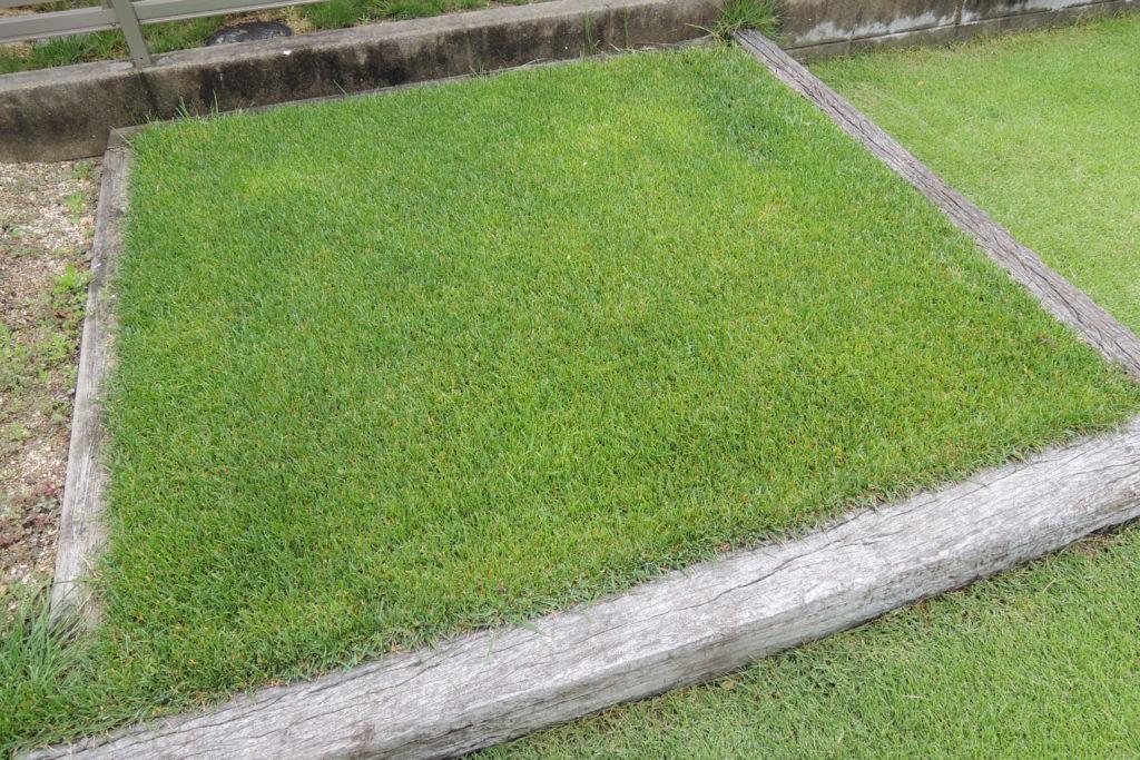 6月の芝生の手入れ 基本作業と注意点