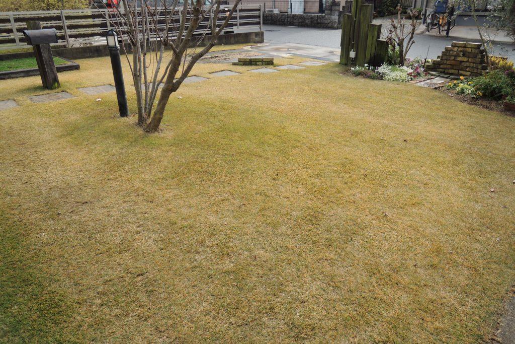 1月の芝生の手入れ 基本作業と注意点