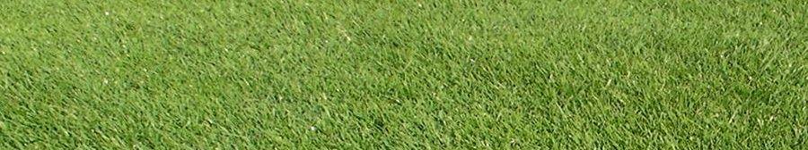 芝生イメージ