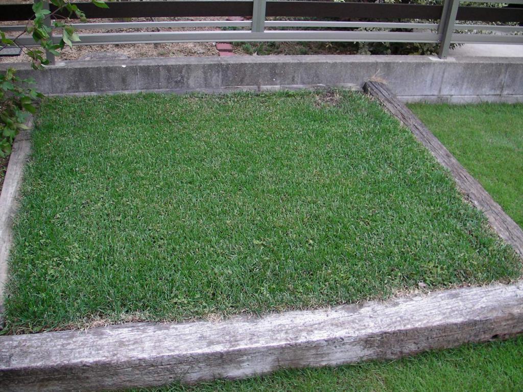 10月の芝生の手入れ 基本作業と注意点