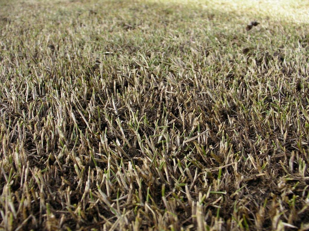 3月の芝生の手入れ 基本作業と注意点