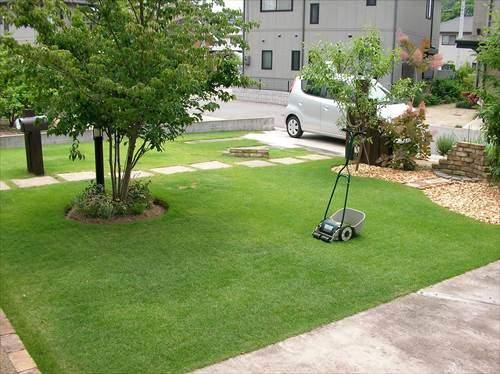 芝生と樹木の共存は難しい場合がある