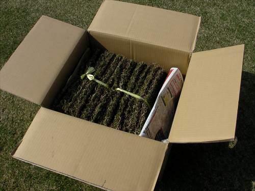 暑い時期は通販の新鮮な切り芝が理想