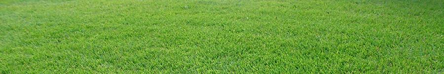 芝生イメージ画像