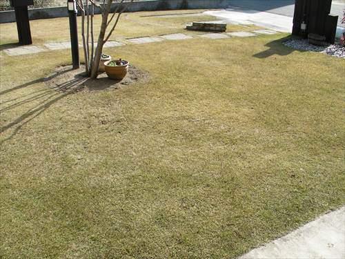 冬は休眠する芝生