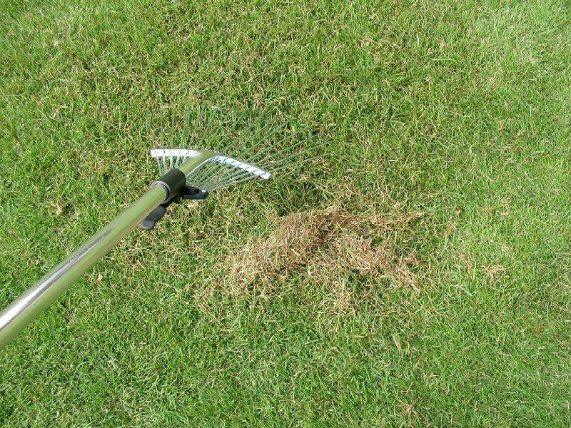 芝生のサッチについて