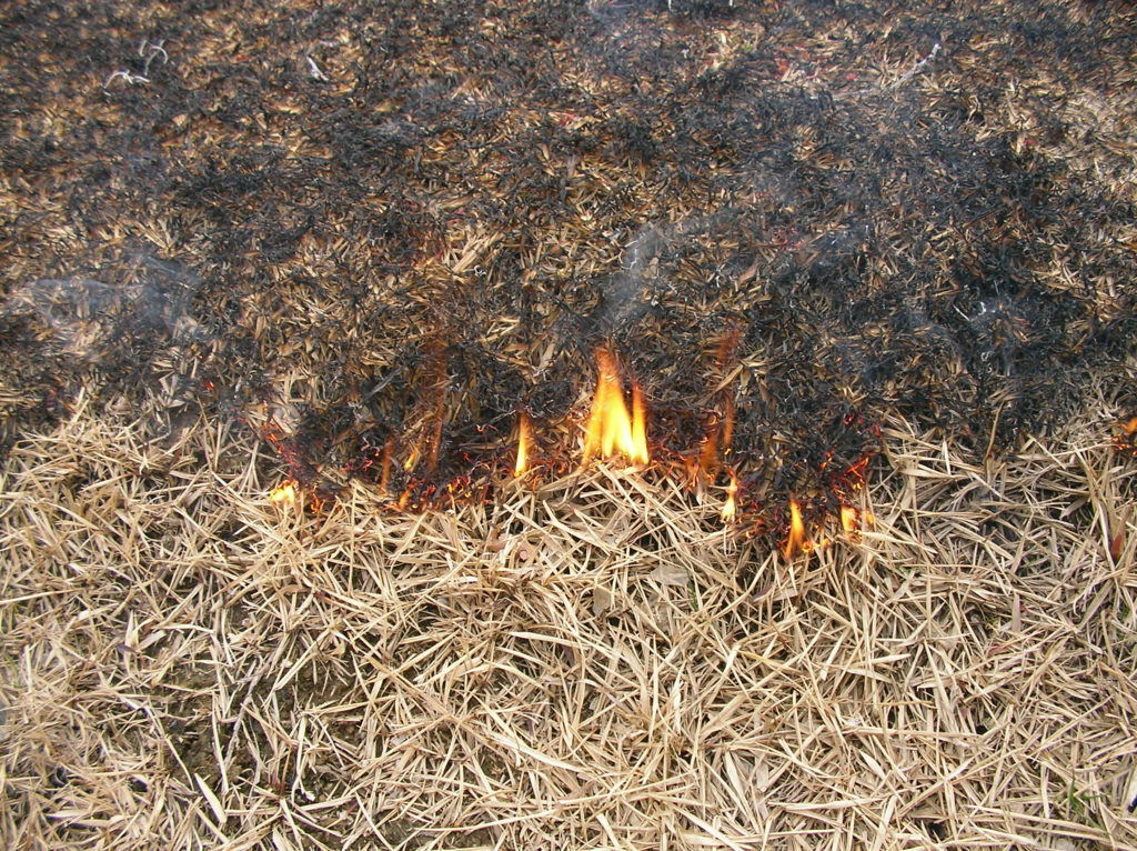芝焼きの時期や効果、やり方について実践的な視点で解説します