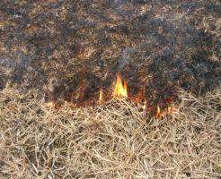 枯れた芝生が燃えている様子