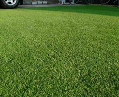 絨毯のように仕上がった芝生