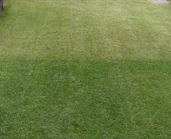 芝生用着色剤を噴霧したところ