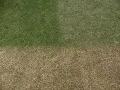 芝生用着色剤の効果の違い