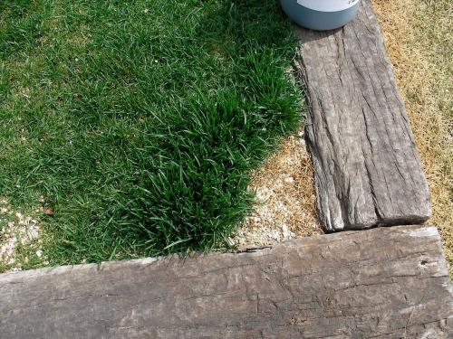 おしっこ直撃場所は枯れるが周辺は肥料効果でよく成長する