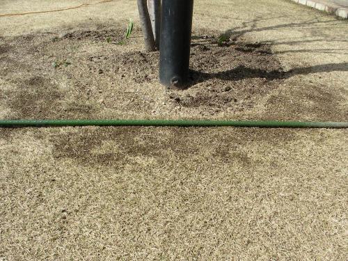 芝生の不陸を確認しながら削る