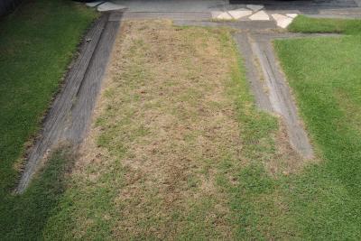 車に日照をさえぎられて枯れが進んだ芝